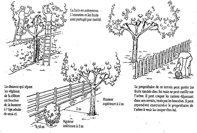 Art elagage 14 elagage calvados l 39 arbre et la loi - Mur en limite de propriete droit ...